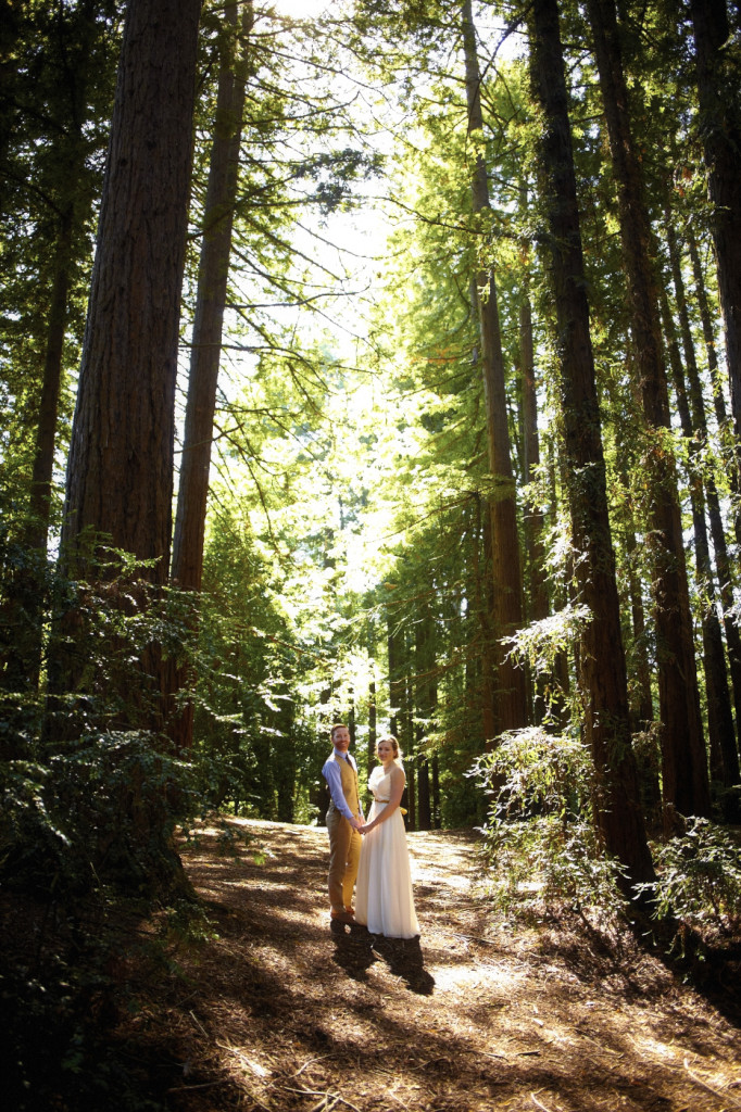 Under the redwood canopy