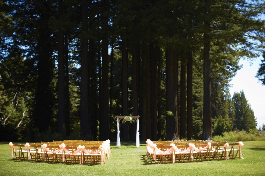 A redwood grove backdrop